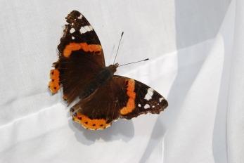 butterfly-1358845_1920